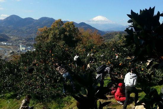 Meijirubber20131130_1.jpg